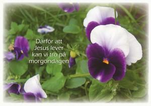 Vykort - Påsk - Därför att Jesus lever